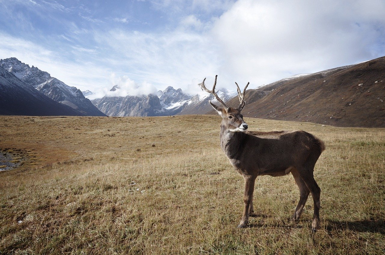 How to Hunt Sitka BlackTail